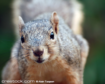 Close-up portrait of a squirrel